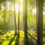 A Trillion Trees is a Trillion Times Better Than Nothing
